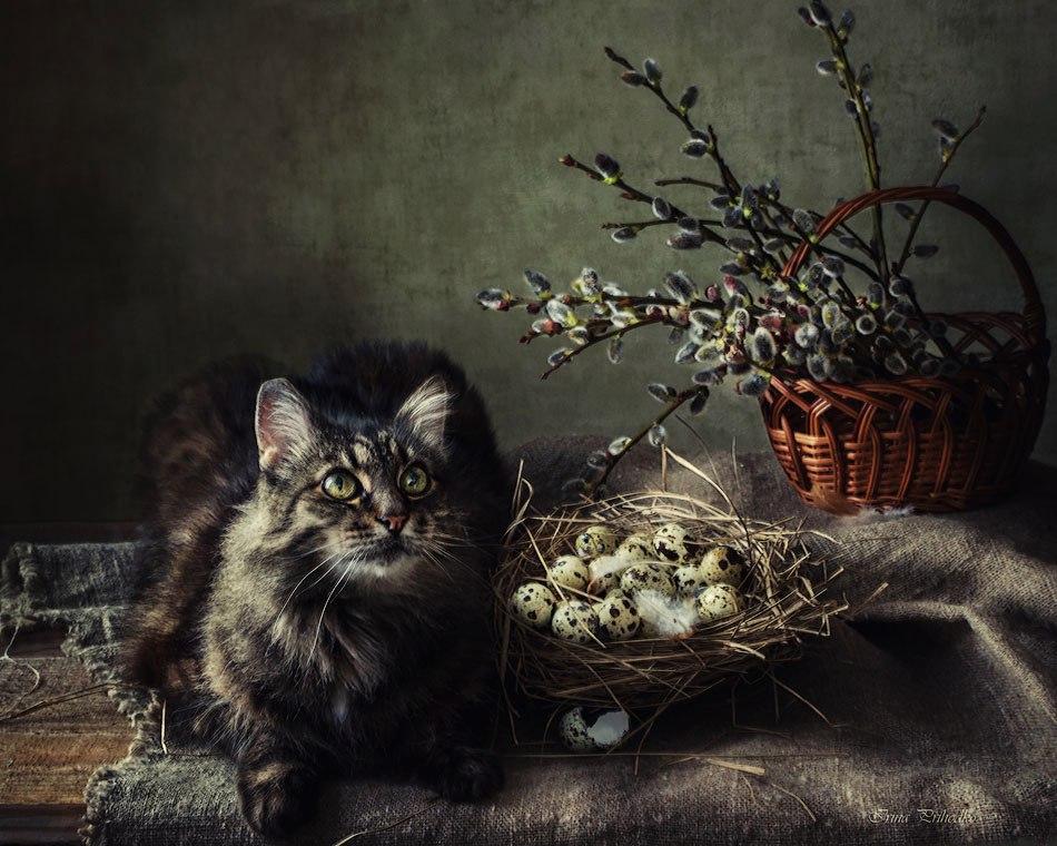 пасхальный кот